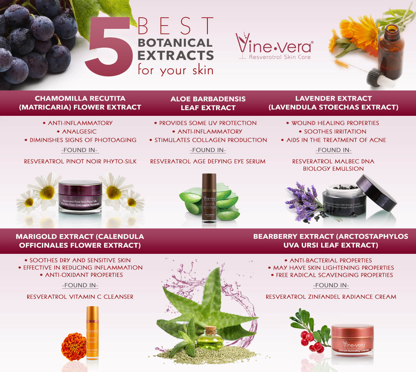 Infographic on the 5 best botanicals for the skin