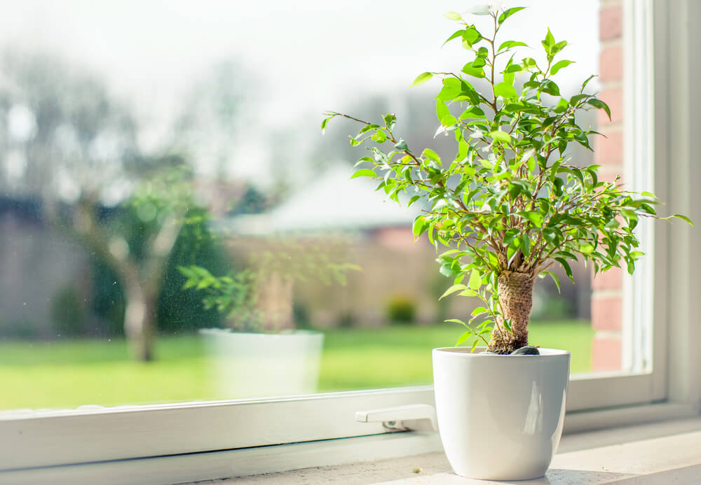 Small potted plant on window sill