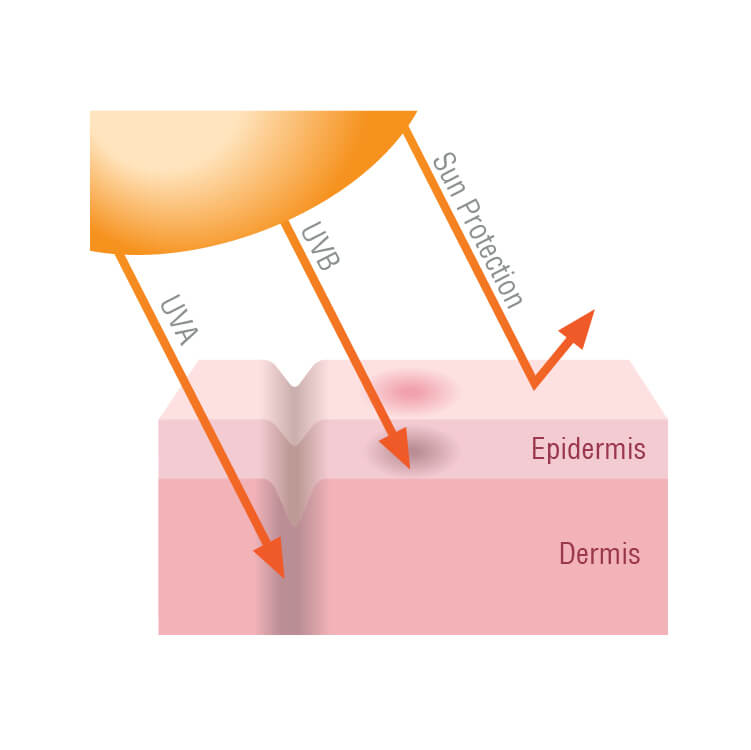 Illustration of effect of sun protection on skin