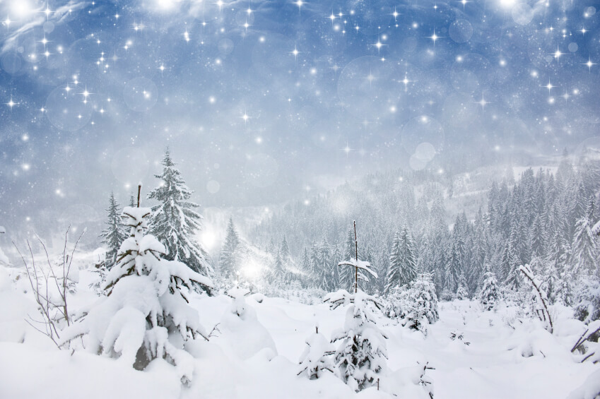 Beautiful serene winter scenery with snow falling thickly on pine trees